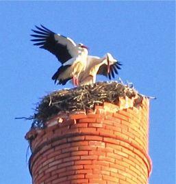 Faro, Portugal, storks, memoir, First You Let it Go, fado