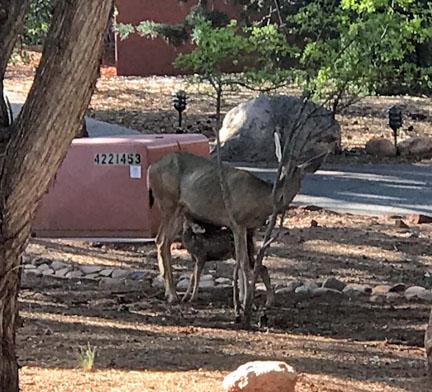 Joeann Fossland, Sedona, Arizona, Mii amo spa, retreat, Grand Canyon, hiking, trails