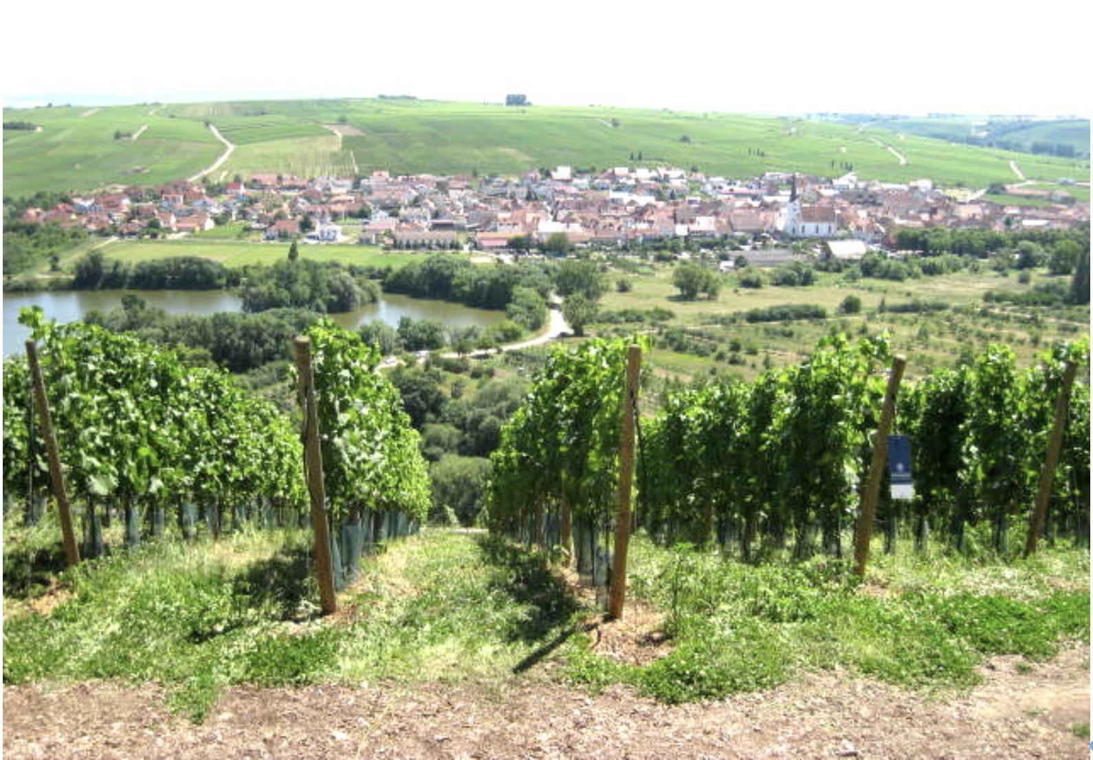 Central Germany, Obereisenheim, Nuernberg, Franconian countryside, Franks, Roman Empire, wine, vineyards