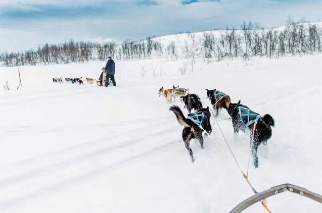 Norway Dog Sledding Adventure Tromso
