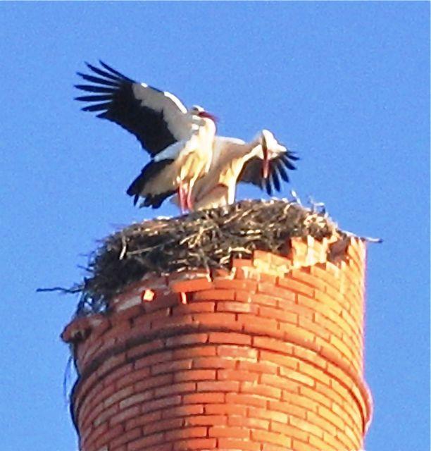 Faro, Portugal, storks