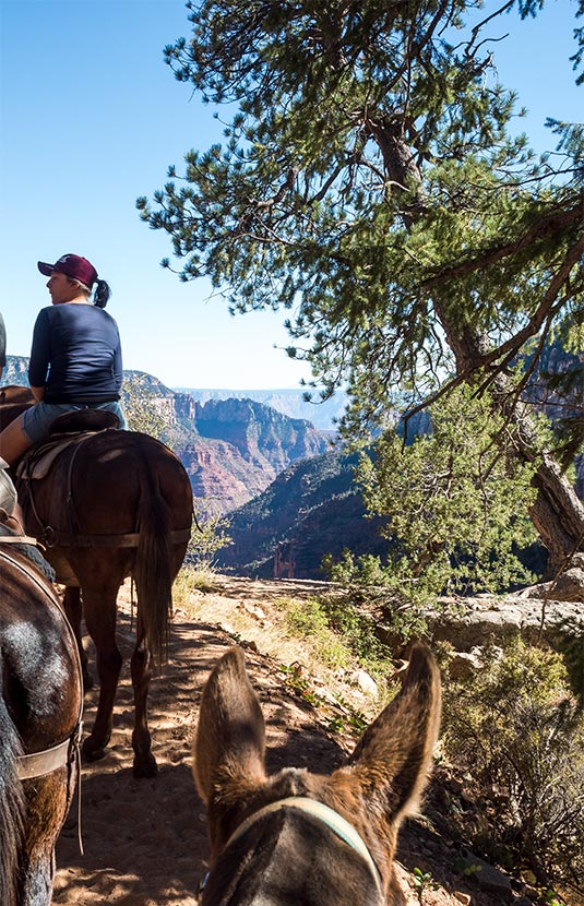 Grand Canyon,Mules,Supai,adventure