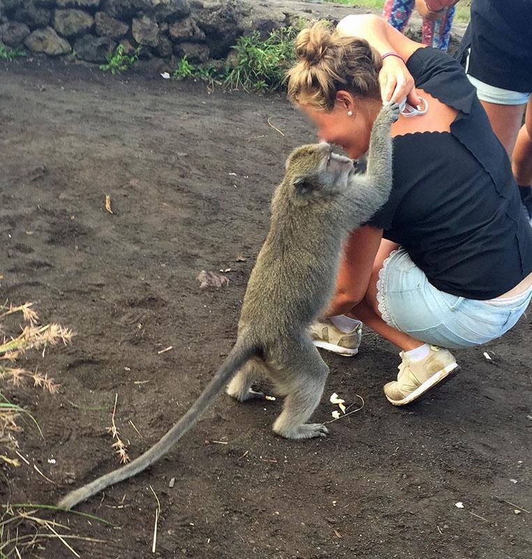 Bali volcanic Mount Batur: Paula Nandi Szabo Monkeys