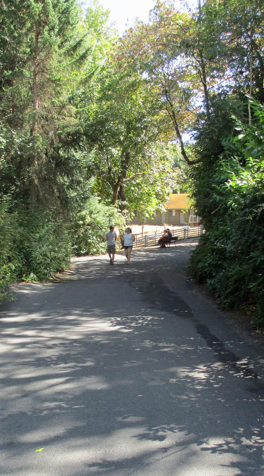 Woodland Park Zoo, Seattle, Gorillas, Lions, Meerkats, Falcons, best zoos in US.