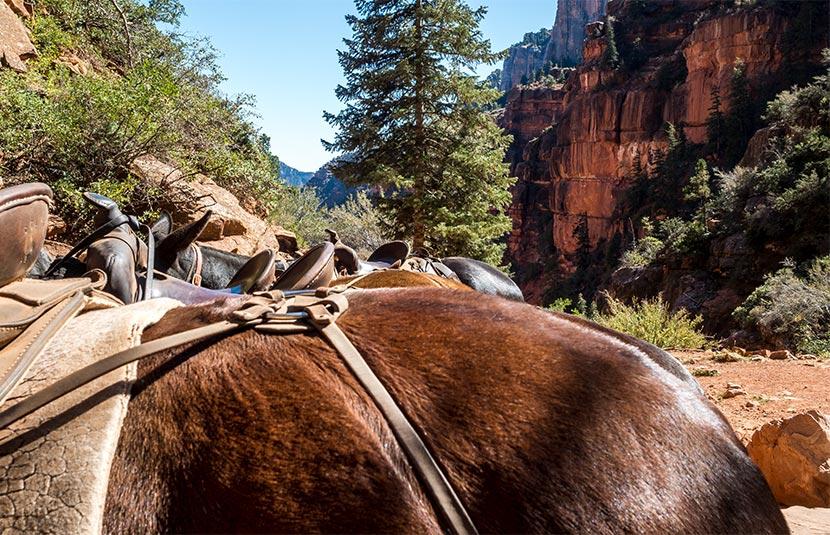 Grand Canyon Mule ride.