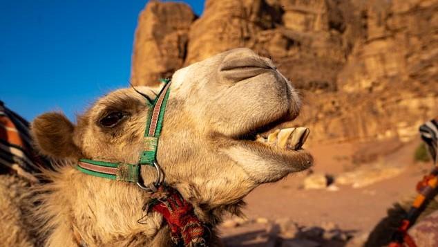 Jordan, Wadi Rum, photography, Travel to Jordan, Beduoin, ruins, Gadara, Umm Qais, shepards