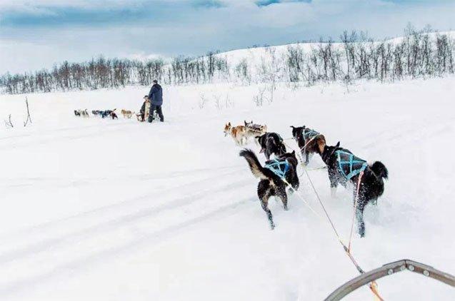 Norway Dog Sledding Adventure Tromso