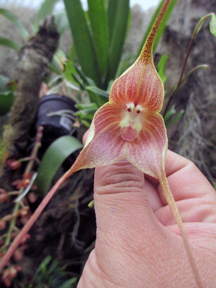 Orchids Ecuador