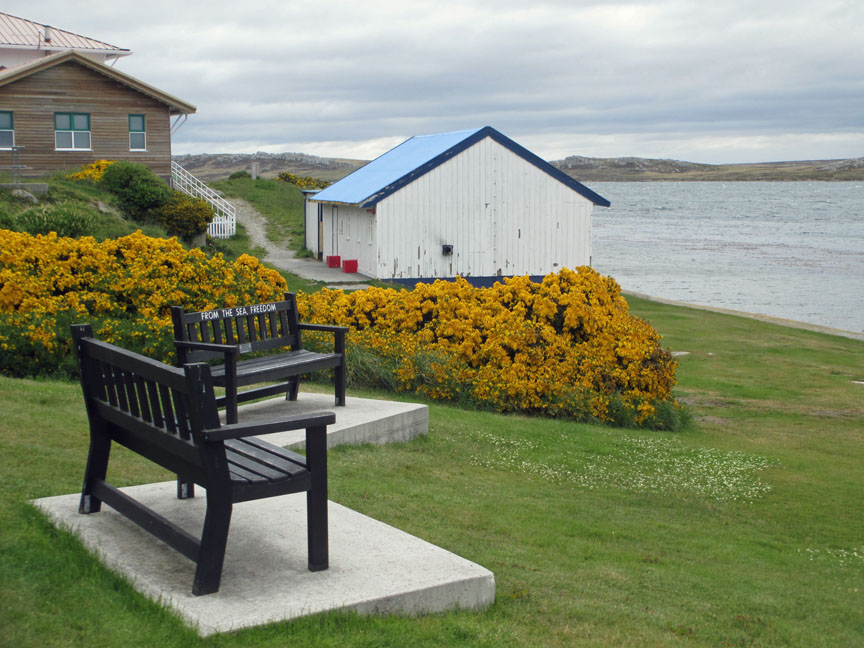 Falkland Islands, penguins, British, Argentina, South America, waterfront, Port Stanley